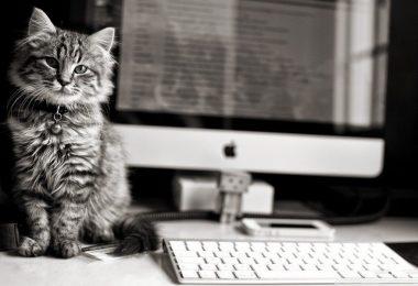 kedilerin bilgisayar sevgisi
